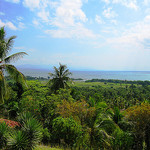 Wald-Hispaniola
